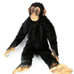 dean's chimpanzee